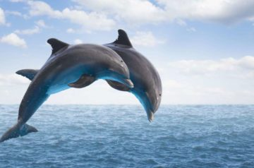 Dolphin Brain and The Struggle for Survival