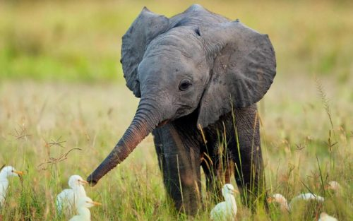 The Little Elephant Who Wants to Fly
