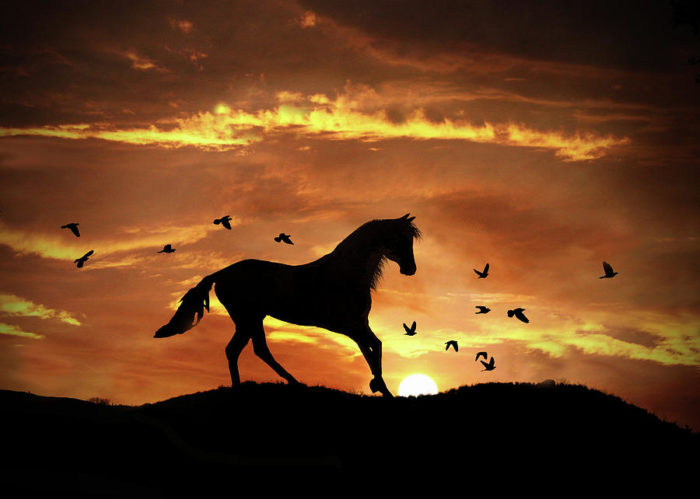 Bucephalus: The Horse That Conquered the World