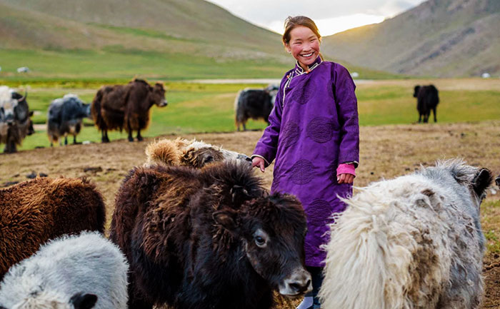 Mongolia Donates 30000 Sheep to China to Help with Coronavirus